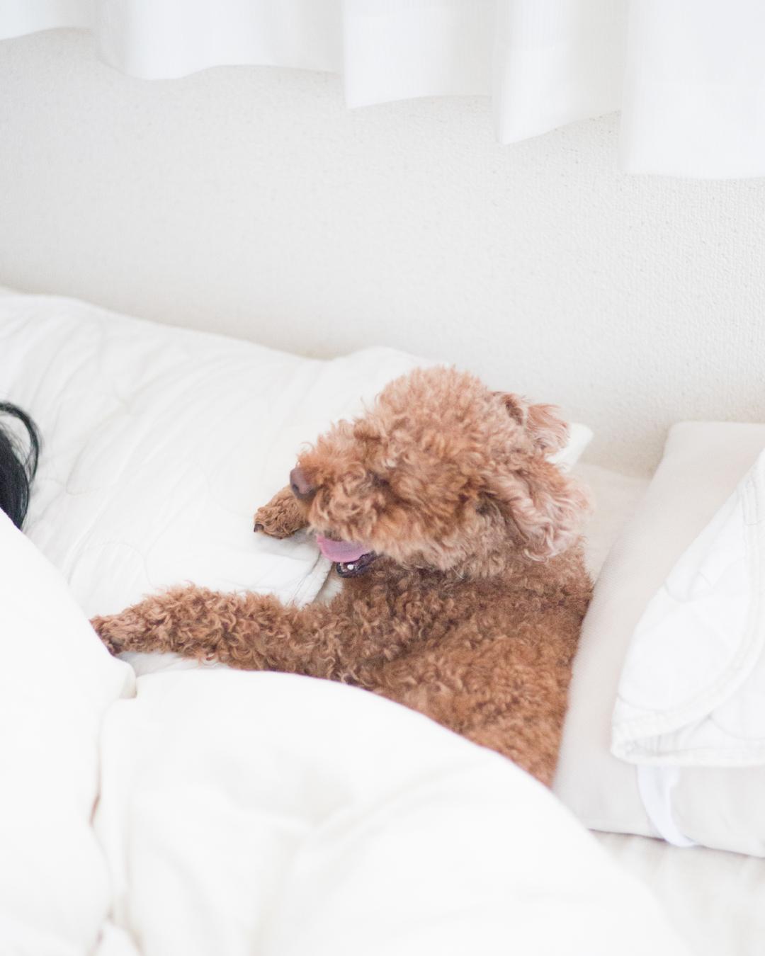 ベッドの間に潜り込んでる愛犬ちゃん